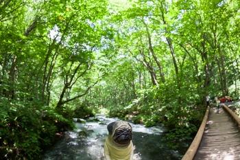 奥入瀬渓流とくんぺい2