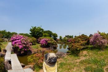 つつじが岡公園庭園2